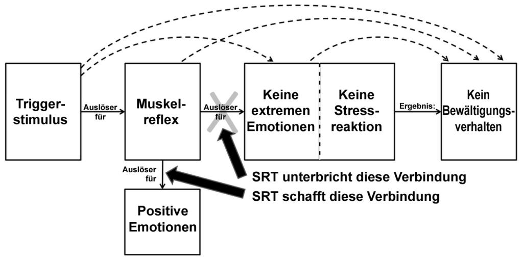 Mit SRT wird der Muskelreflex umgelenkt, indem er positiv belegt wird.