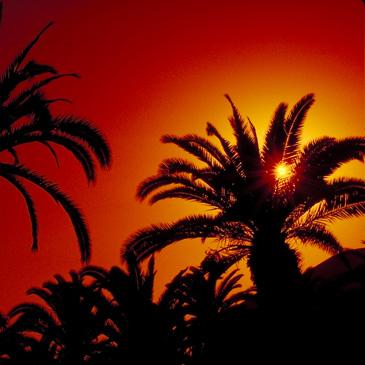 Palmen vor untergehender Sonne